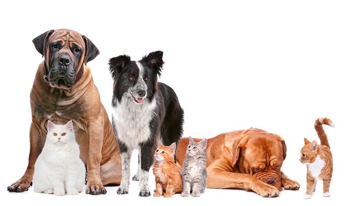 Anuncio: Actualización censo de animales de compañía